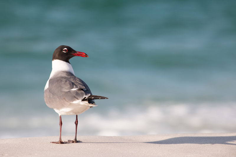bird-on-beach for Galveston Holiday Rentals